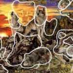 Тест: Сколько волков вы увидели на картинке. Узнайте всё ли в порядке с вашей памятью.