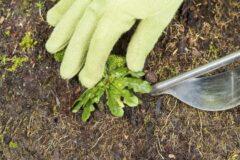 Эффективные способы удаления сорняков.