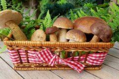 Как заморозить грибы, чтобы они не потеряли свой истинный вкус