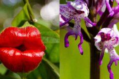 Топ самых дорогих растений, которые растут на земле.