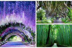 Топ-10 самых интересных туннелей под деревьями