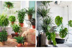 Лучшие комнатные растения для вашего дома